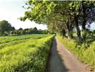 This is not a country lane - its the lovely approach to the property.